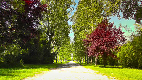 Romantic Nature Road with Trees 03 stylized Stock Video Footage
