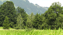 Summer Meadow 02 Stock Video Footage