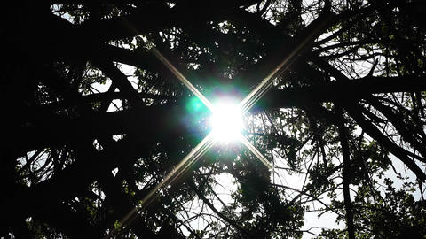 Sun Shines through Trees 02 Stock Video Footage