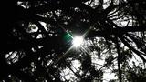 Sun Shines through Trees 02 Footage