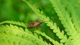 Brown Beetle stock footage