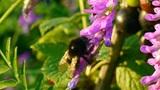 bumblebee 2 Footage