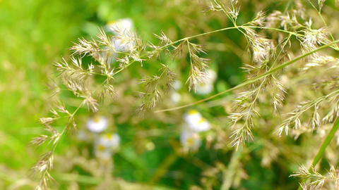 Yellow grass swaying in the wind Stock Video Footage