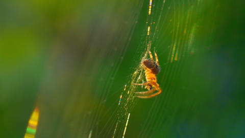 spider 4 Stock Video Footage