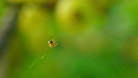 spider 6 Stock Video Footage