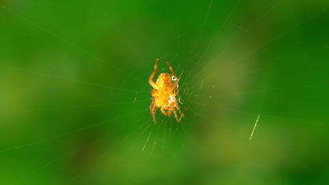 spider 8 Stock Video Footage