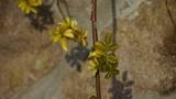 Green shrub leaves on stone wall Footage