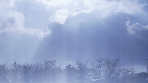 High clouds cover sun sky,Branches,trees,forests,silhouette Stock Video Footage
