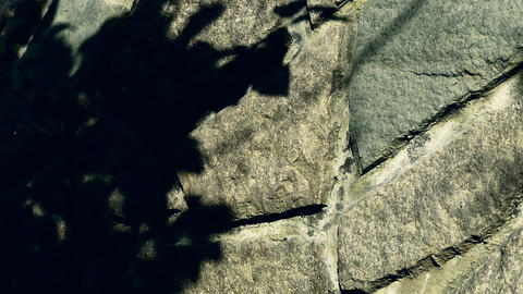 swing leaves silhouette shadow on stone wall Footage