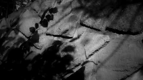swing leaves silhouette shadow on stone wall at night Footage