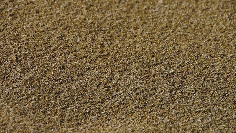 sand,wind blow sand particles on beach Stock Video Footage