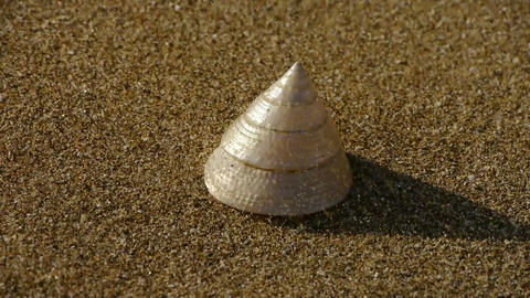cone-shell on sandy beach,wind blow sand Stock Video Footage
