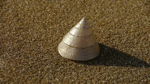 cone-shell on sandy beach,wind blow sand Footage