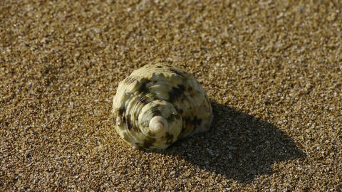conch on sandy beach,wind blow sand Stock Video Footage