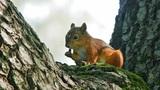 Squirrel eats Footage