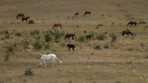 wild horses graze on dry hills Stock Video Footage