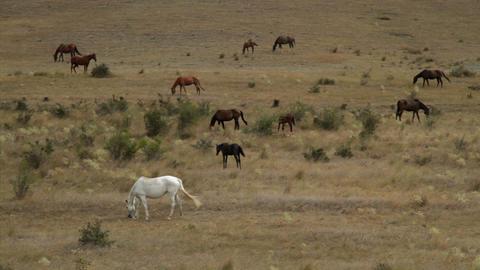 wild horses graze on dry hills Stock Video Footage