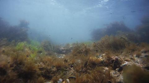 Algae Stock Video Footage