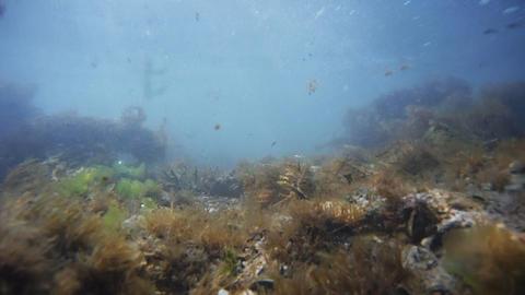 Algae Footage