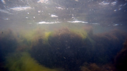 Algae Stock Video Footage