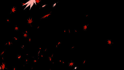 HD Looping Autumn Leaves Animation with Alpha Channel Stock Video Footage