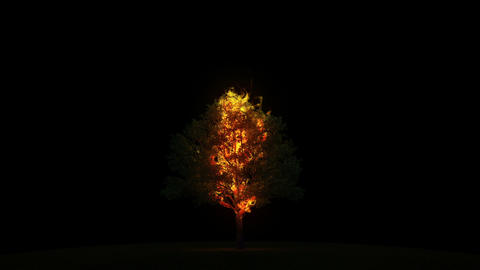 Burning tree with alpha Stock Video Footage
