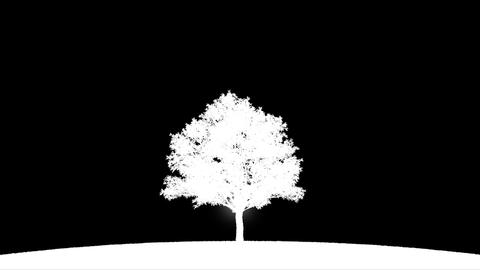 Burning tree with alpha Animation