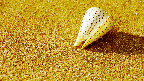 conch on golden sandy beach,wind blow sand Stock Video Footage