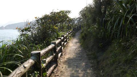 Walk through footpath on hillside, dark tunnel in trees lead to opening Footage