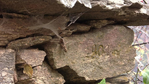 Cobwebs blown by wind tight on a stone with the inscription on it 55 Footage