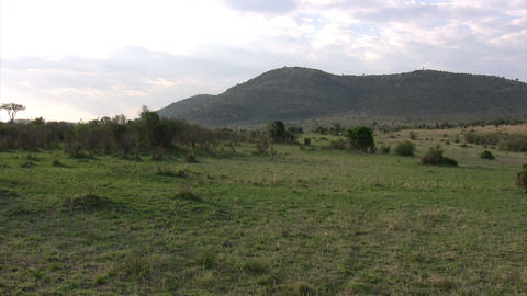 Landscape, Masai Mara Footage