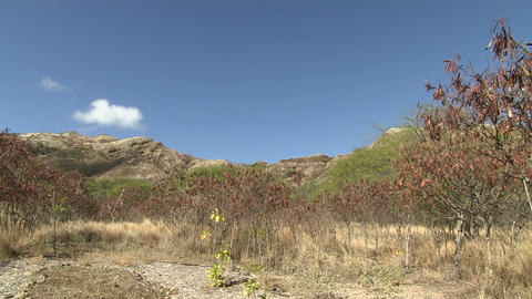 Diamond Head stock footage