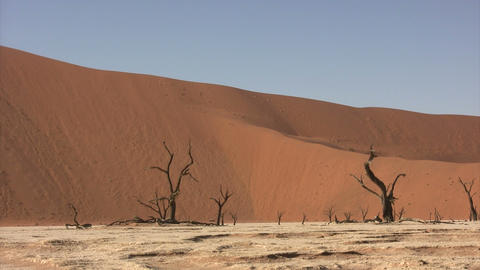 Dead Trees in Namib Desert, Namibia Footage