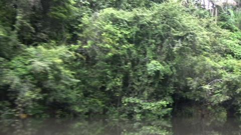 Flood in Amazon Rainforest Live Action