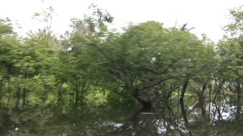 Trees in Amazon Rainforest Live Action