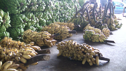 Bananas For Sale at Market Footage
