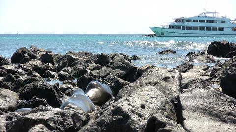 Galapagos Sea Lion ライブ動画