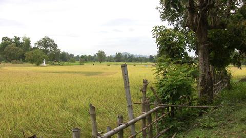 Don Det, Laos Footage