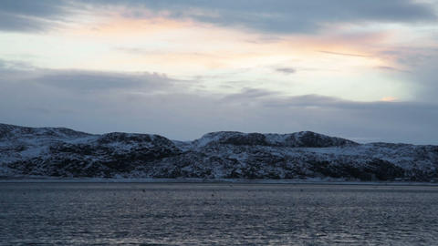 Many gulls flying over the Barents Sea in the short polar day in winter Footage