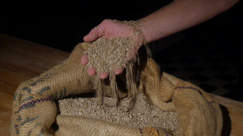 11775 German Baker Checking Wheat Grains Spotlight stock footage