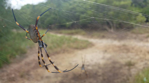 Spider in Web Footage