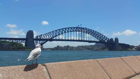 SYDNEY HARBOUR BRIDGE, AUSTRALIA Live Action