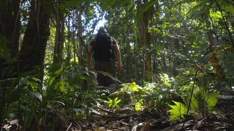Hiking solo walking outdoors adventure in rainforest jungle Footage