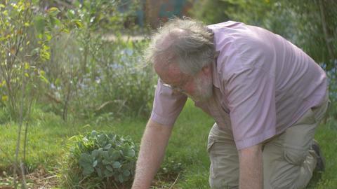 Gardening elderly Senior retired grandfather man retirement age outdoors Footage