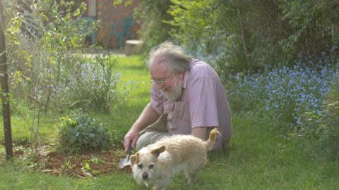 Grandfather retired elderly mature senior adult retirement gardening with dog Live Action