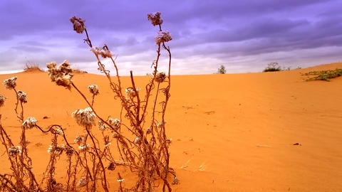 Red Desert Sand Dune Landscape stock footage