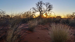 Outback Australia Sunset Landscape Red Desert Sand and Dry Arid Grasslands Footage