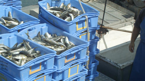 Commercial Fishing Industry fisherman fish catch on boat at fishing docks Footage