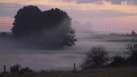 Country Field Morning Fog Mist stock footage