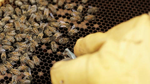 honey bee hive pests and diseases Footage